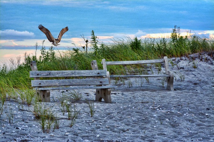Coming in for a landing, Soundview Beach, Stratford CT